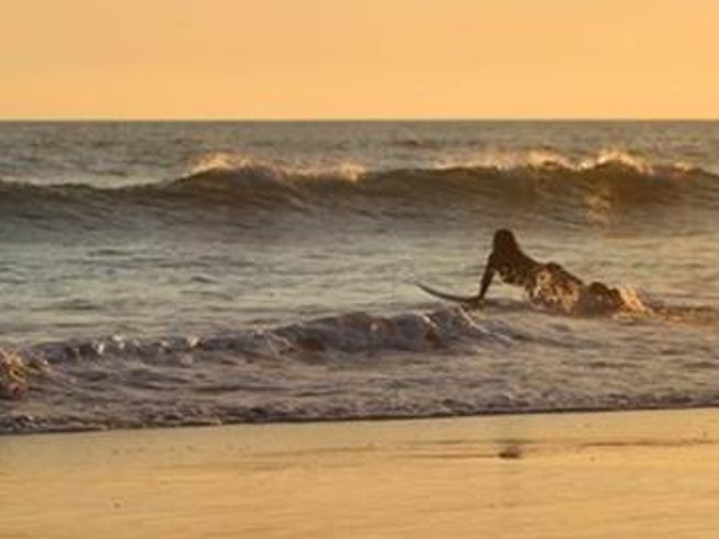 6 Days Bee Surf and Yoga Retreat in Bali
