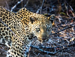 8 Days Exquisite Photography Safari in South Africa
