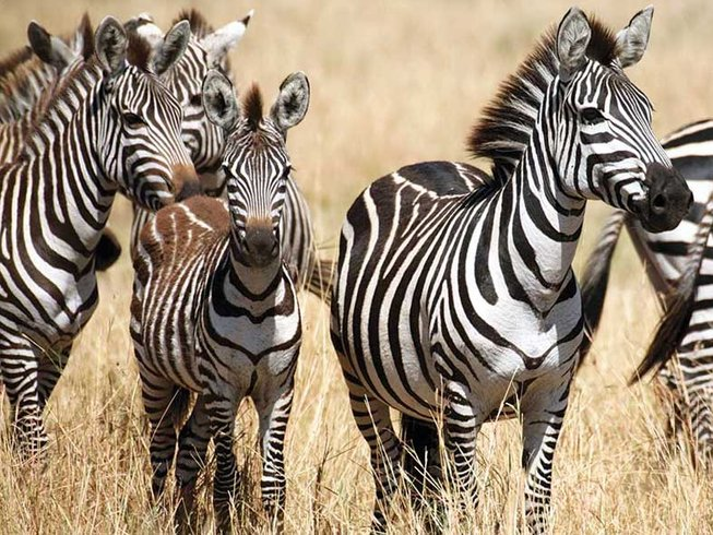 7 Days Magnificent Safari South Africa