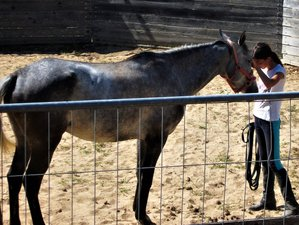 8 Days Natural Horsemanship Course Holiday in Sardinia, Italy