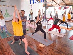 21 Days 200-Hour Hatha Yoga Teacher Training in Mysore, India