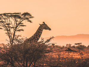 Multi-country: Kenya & Tanzania