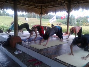 3 Days Beginner Yoga and Meditation Retreat with Cultural Activities in Bali, Indonesia