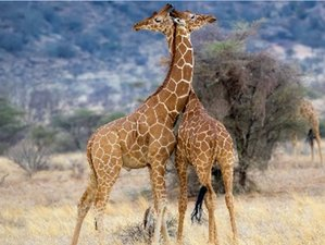 9 Days Affordable Safari in Tanzania for a Group of 5 with Relaxing Beach Holiday in Zanzibar