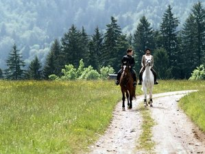 7 Days Beginner Horse Riding Holiday in Styria, Slovenia
