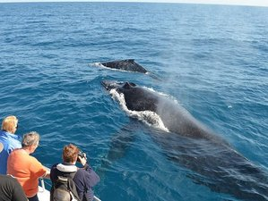 7 Day Whale Watching, Nature, and Wildlife Safari in Sri Lanka