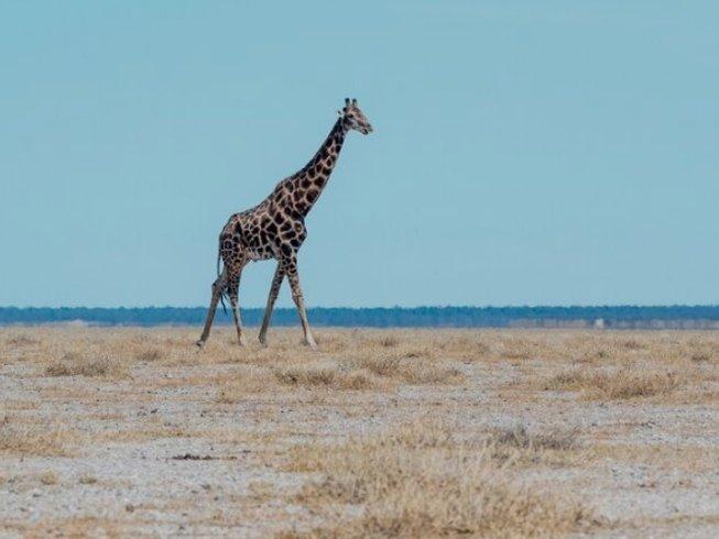 4 Days Budget Onguma Game Reserve and Etosha National Park Safari