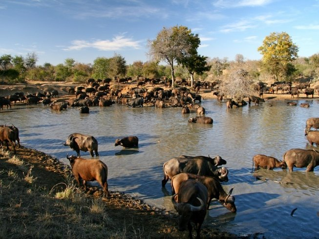 7 Days Adventure Safari in South Africa and Swaziland