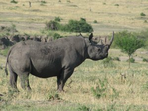 8 Days Eco Friendly Safari in Tanzania