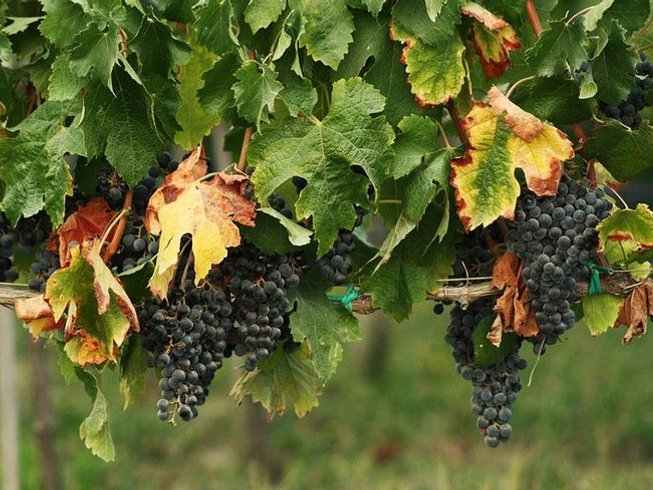 4 Days Wine Tour and Culinary Vacations in France