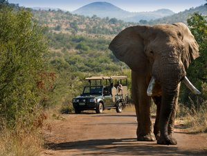 2 Day 4 Star Pilanesberg Private Lodge Safari, South Africa