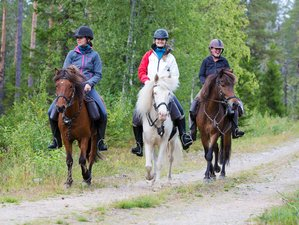 8 Days Between Lakes and Forests Horse Trail in Svansele, Swedish Lapland