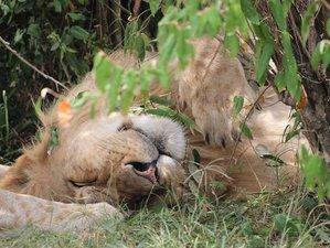 10 Days Best of Kenya Lodge Safari