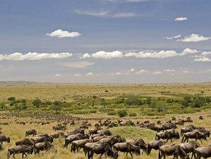 7 Days Great Migration and Bird Watching Safari in Masai Mara, Amboseli, and Lake Nakuru, Kenya