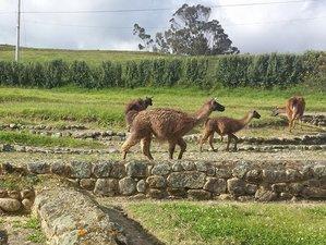 5 Day Volcanos, Ecolife Adventure, and Wildlife Tour in Ecuador