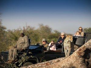 3 Days RockFig Lodge Safari in Timbavati Private Nature Reserve, South Africa