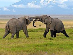 7 Days Camping Safari in Kenya