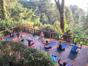 6 Days Rainforest Overlooking Caribbean Sea Yoga Retreat in Costa Rica