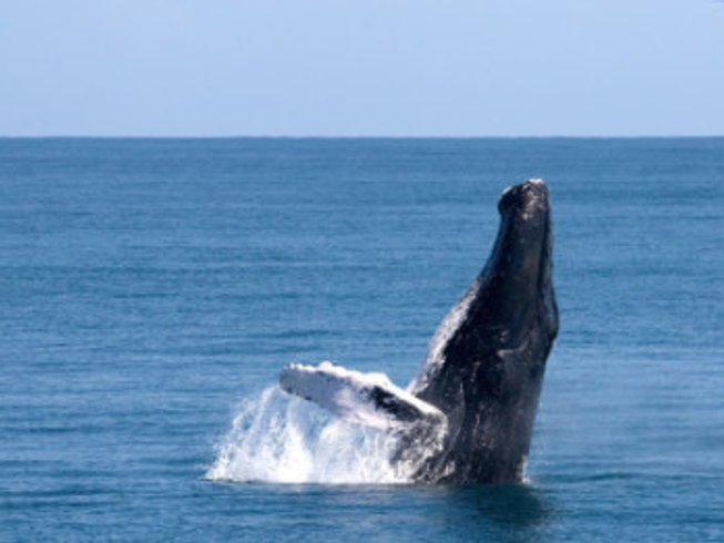 7 Days Whale Watching, Meditation, and Yoga Retreat in Samana Province, Dominican Republic