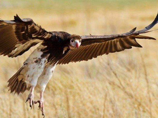 10 Days Photography Botswana Safari