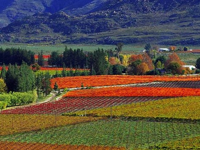 8 Days Western Cape Food & Wine Tour, South Africa