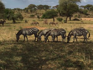 6 Days Wildlife Safari in Kenya