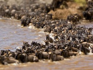 5 Days Lake Nakuru and Maasai Mara Great Migration Safari in Kenya