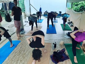 4 Day Yoga, Meditation, and Sound Healing Retreat in The Himalayas, Dharamshala