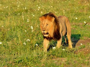 3 Days Camping Safari in Pilanesberg, South Africa