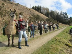 3 Days Yoga, Gorges Walking, Llamas Trekking, and Happiness Holiday in North Yorkshire, UK
