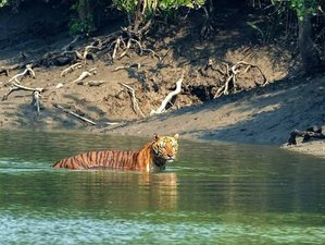 4 Day Enchanting Mangrove Forest, River Cruise, and Wildlife Tour in Sundarbans