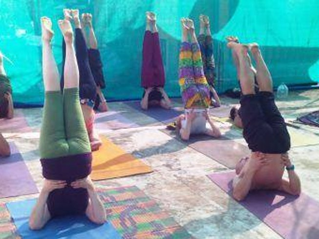 29 Days 200hr Yoga Teacher Training in Dharamsala