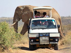 2 Days Safari in Tsavo East National Park, Kenya