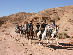 4 Days Weekend Desert Horse Riding Holiday in Negev, Israel