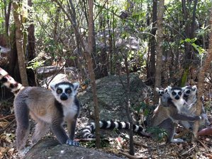 14 Days Luxurious Conservation Safari in Madagascar