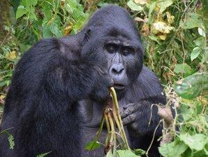 3 Days Gorilla Trekking, Culture, and Wildlife Safari in Uganda