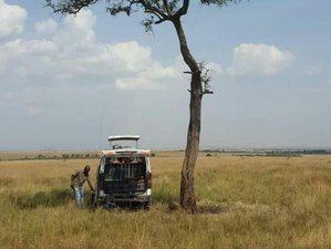 2 Days Maasai Mara National Reserve Safari in Kenya