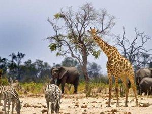 5 Days Lake Manyara, Ngorongoro Crater, and Tarangire Family Safari in Tanzania