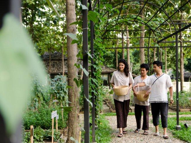 5 Days Balancing Meditation and Yoga Retreat Chiang Mai Province, Thailand