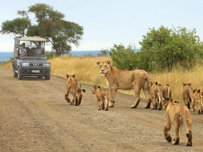 8 Days Epic Adventure Safari in Zimbabwe