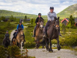 5 Days Beginner Horse Riding Holiday in Venabygd, Norway