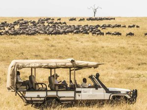6 Days Wild Luxury Safari Tour in Masai Mara and Tsavo, Kenya
