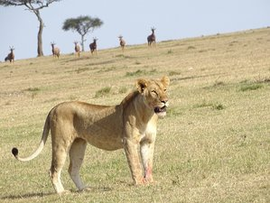 3 Days Budget Safari in Kenya