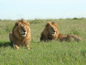 5 Days Masai Mara, Lake Nakuru, Lake Naivasha Magical Wildlife Safari in Kenya