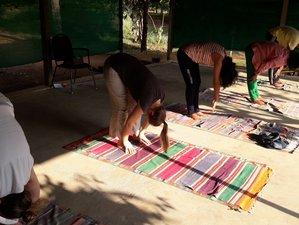 7 Days Ayurveda and Yoga Holiday in Kerala, India