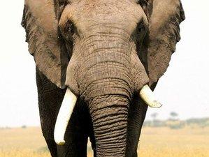 2 Days Incredible Safari in Amboseli National Park, Kenya