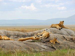 7 Days Wonderful Safari Tour in Kenya
