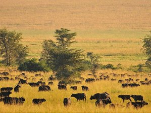 5 Days Magnificent Uganda Safari to Kidepo Valley National Park