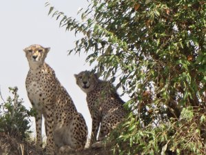 5 Days Awesome Safari in Kenya
