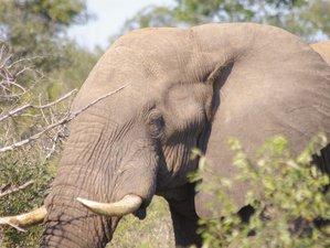 3 Tage Günstige Safari im Kruger Nationalpark, Südafrika